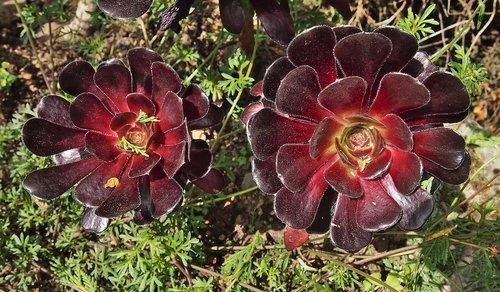 succulent  botanic garden  botany