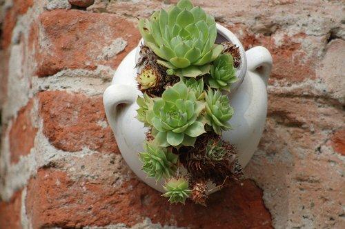 succulent plant  composition  nature
