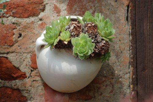 succulent plant  composition  vase