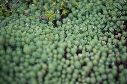 succulent plants plant bowl pick