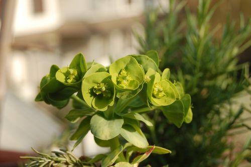 succulent plants fat plants crassulacea