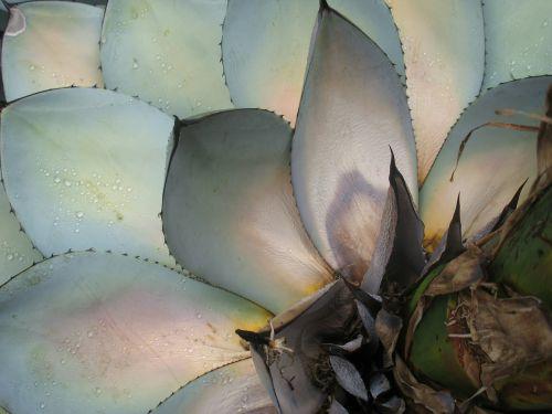 succulents plants leaves