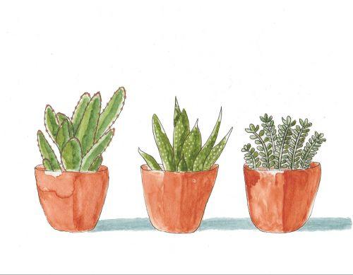 succulents plants potted plants