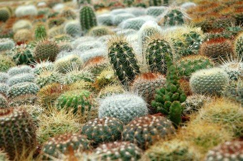succulents  cacti  fat plants