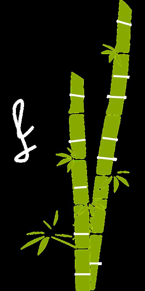 sugar cane bamboo plant