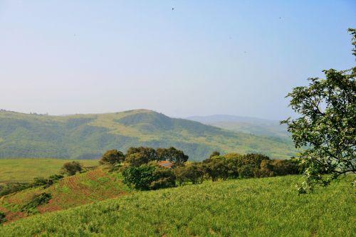 Sugar Cane Covered Hills