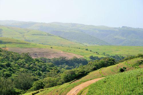 Sugar Cane Landscape