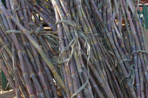 sugarcane sticks long plant