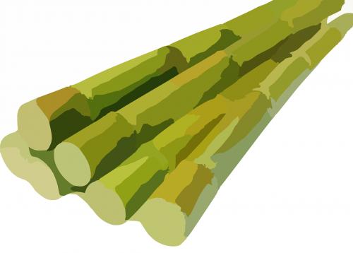sugarcane cane harvested