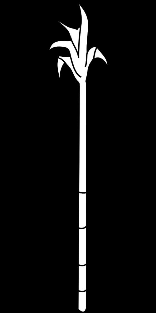 sugarcane cane sugar