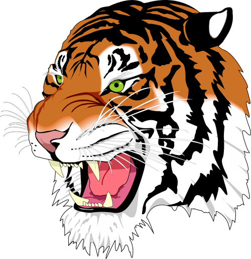 sumatran tiger tiger man-eater