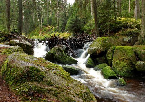 šumava river water