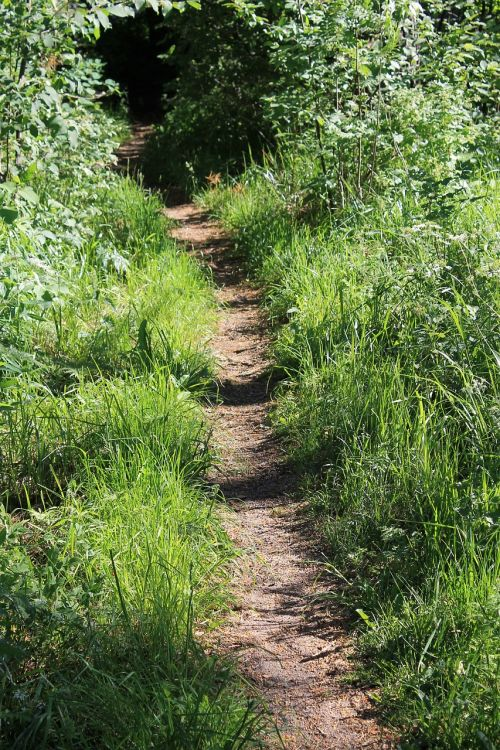 summer the path nature
