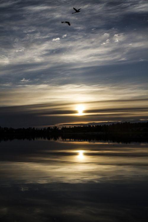 vasara,suomių,gulbė,ežeras,saulėlydis,saulė,ramus vasara