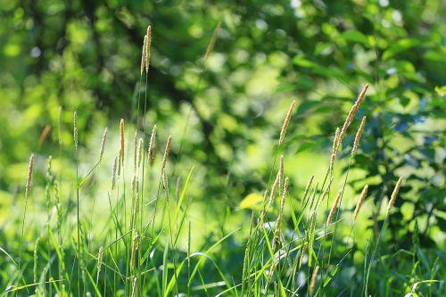 summer grass green grass