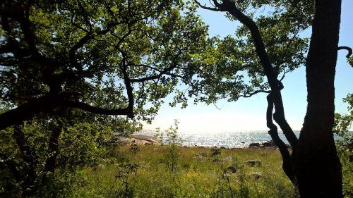 vasara,gamta,jūra,saulėtas,mėlynas
