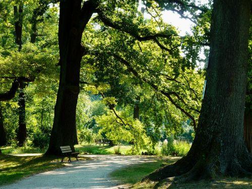summer late summer trees