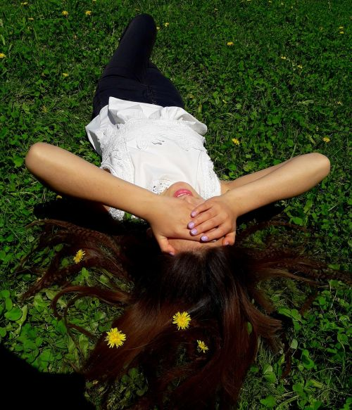 summer dandelions nature