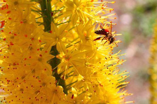 summer bee yellow