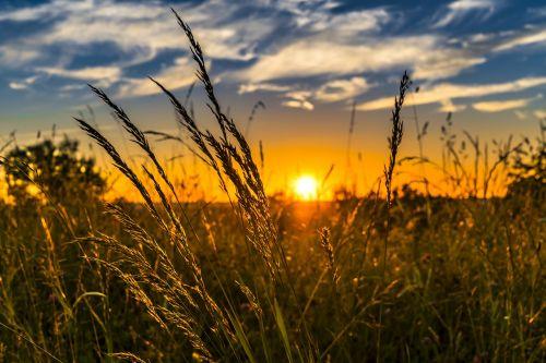 summer sunset meadow
