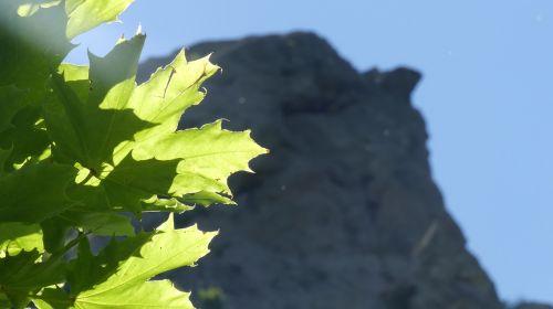summer nature leaves