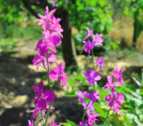 summer flowers summer flowers
