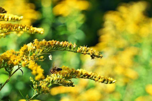 summer flowers summer flower