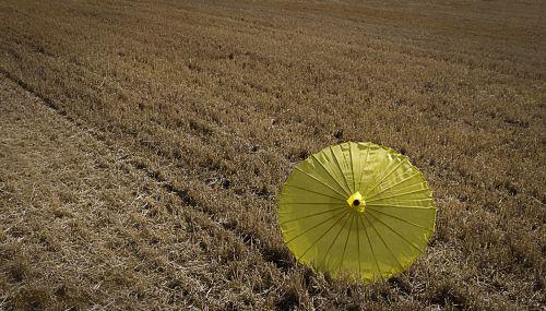 summer yellow field
