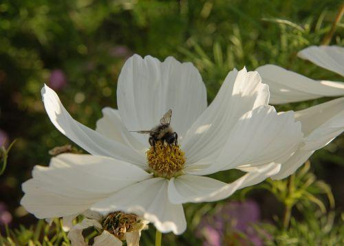 summer american slob white flower