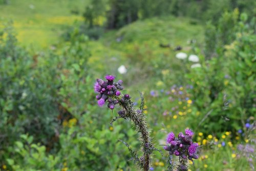 summer  flora  bloom