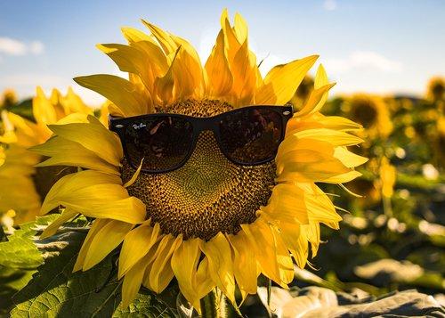 summer  sunglasses  nature