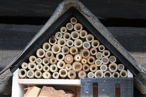summer  bee hotel  insect hotel