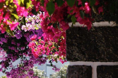 summer  flowers  garden