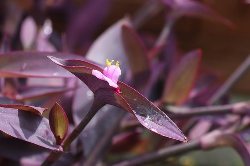 summer  garden  flower