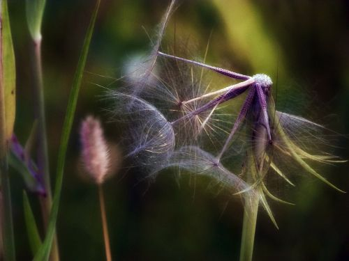 summer floral plant