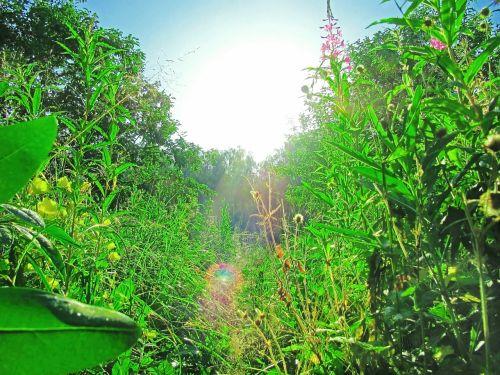 summer long grass green