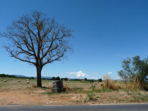 summer tuscany landscape