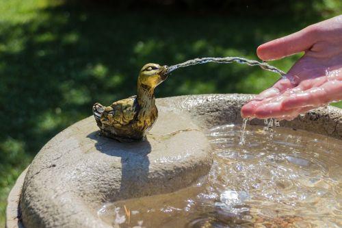summer water thirsty