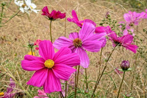 summer flower nature