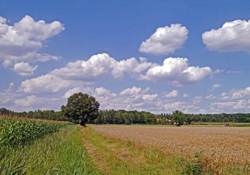 summer day land rural
