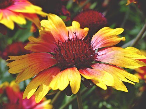 summer flower bloom summer