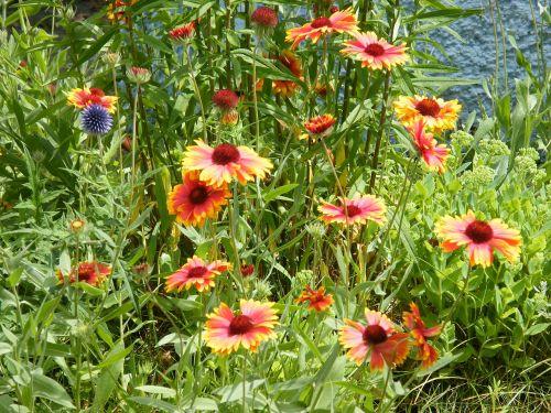 summer flowers meadow flower meadow