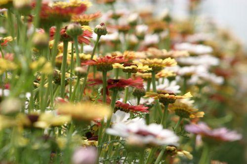 summer flowers assorted flowers farbenpracht