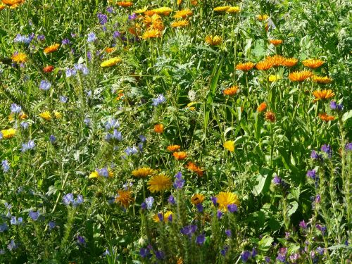 summer flowers meadow colorful