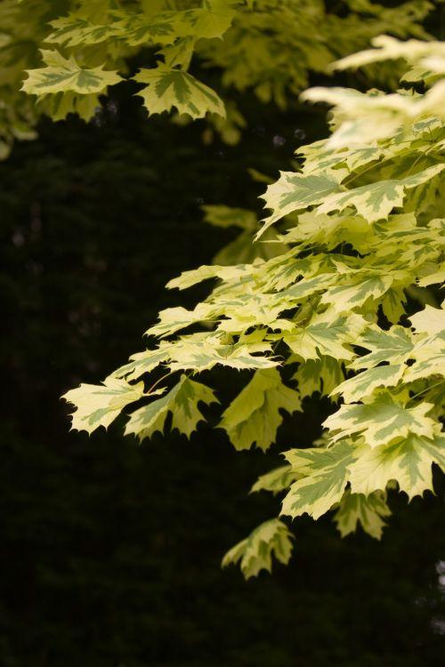 Summer Leaves Background