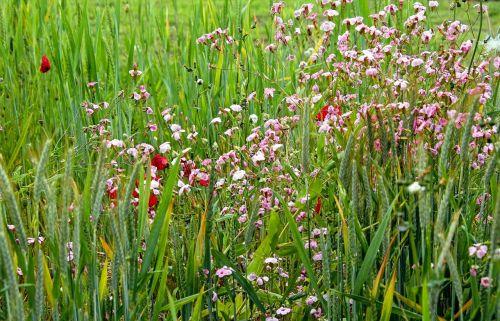 summer meadow summer summer flowers