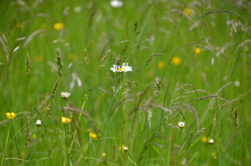 summer meadow meadow nature