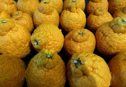 Sumo Mandarins Citrus Fruits