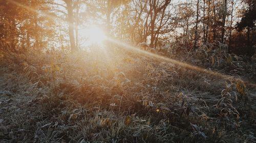sun dawn woods