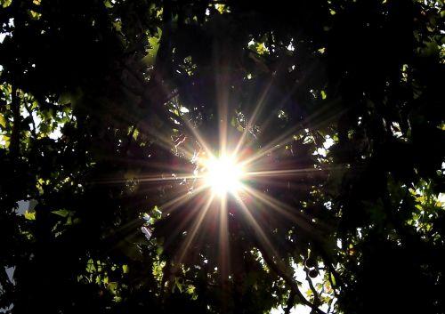 sun sunbeam tree